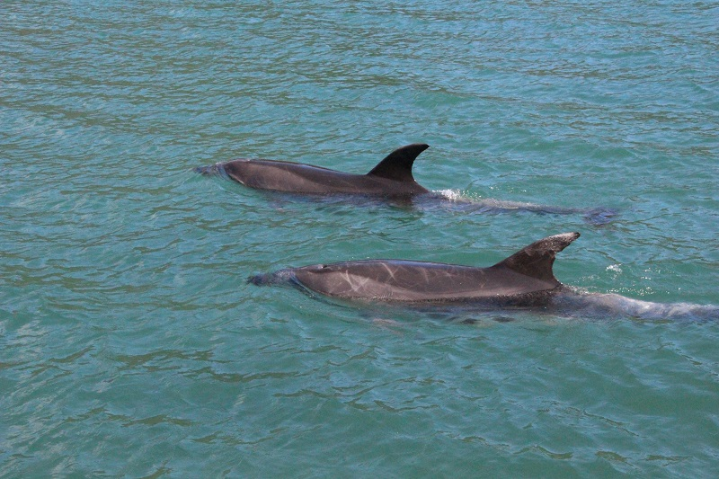 Top 5 things to do on Great Barrier Island